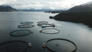 A look from above at Nordic Halibut sea cages