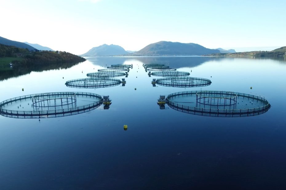 Nordic Halibut sea cages in a calm blue fjord