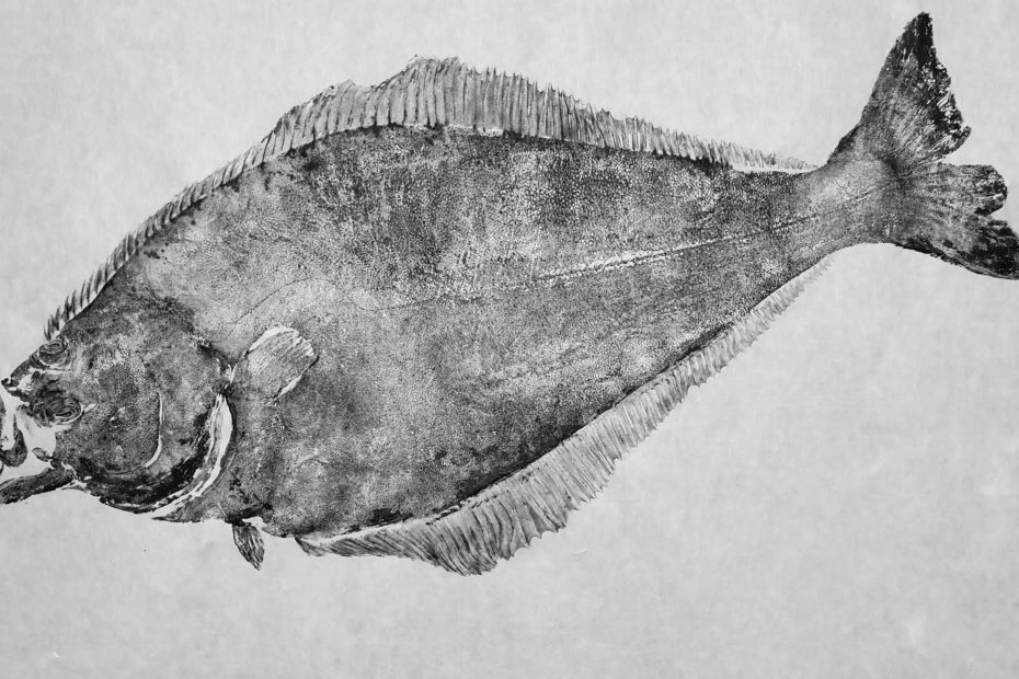 A Nordic Halibut printed using gyotaku technique