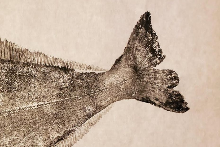 A Nordic Halibut tail printed using gyotaku technique