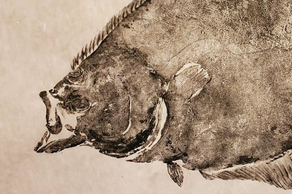 A Nordic Halibut head printed using gyotaku technique