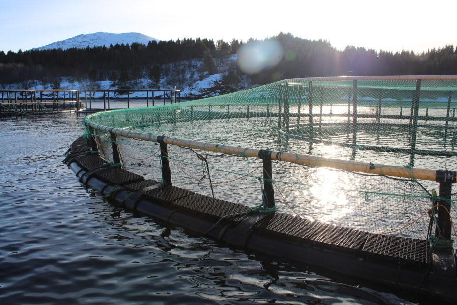 Sea cages at Ørjavika, Norway